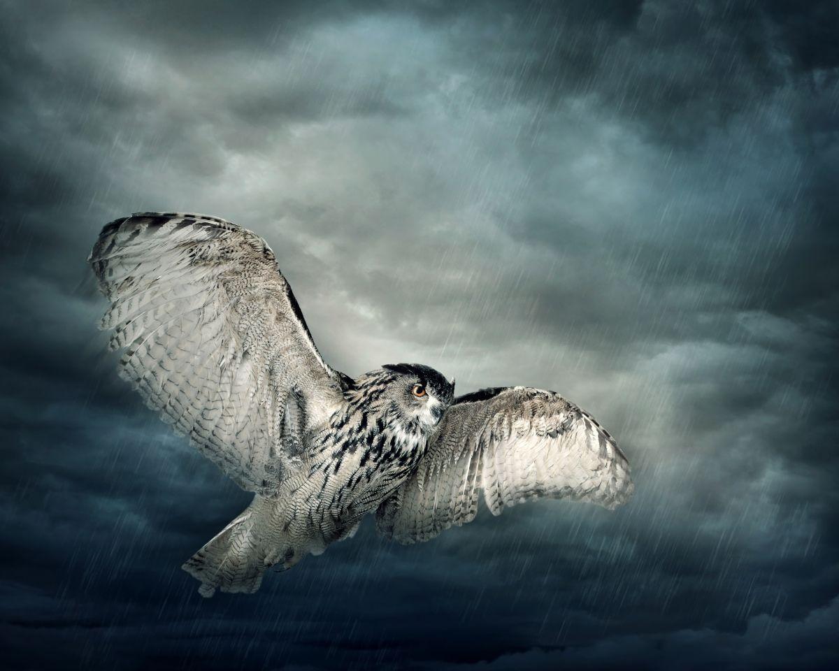 Owl in Sky