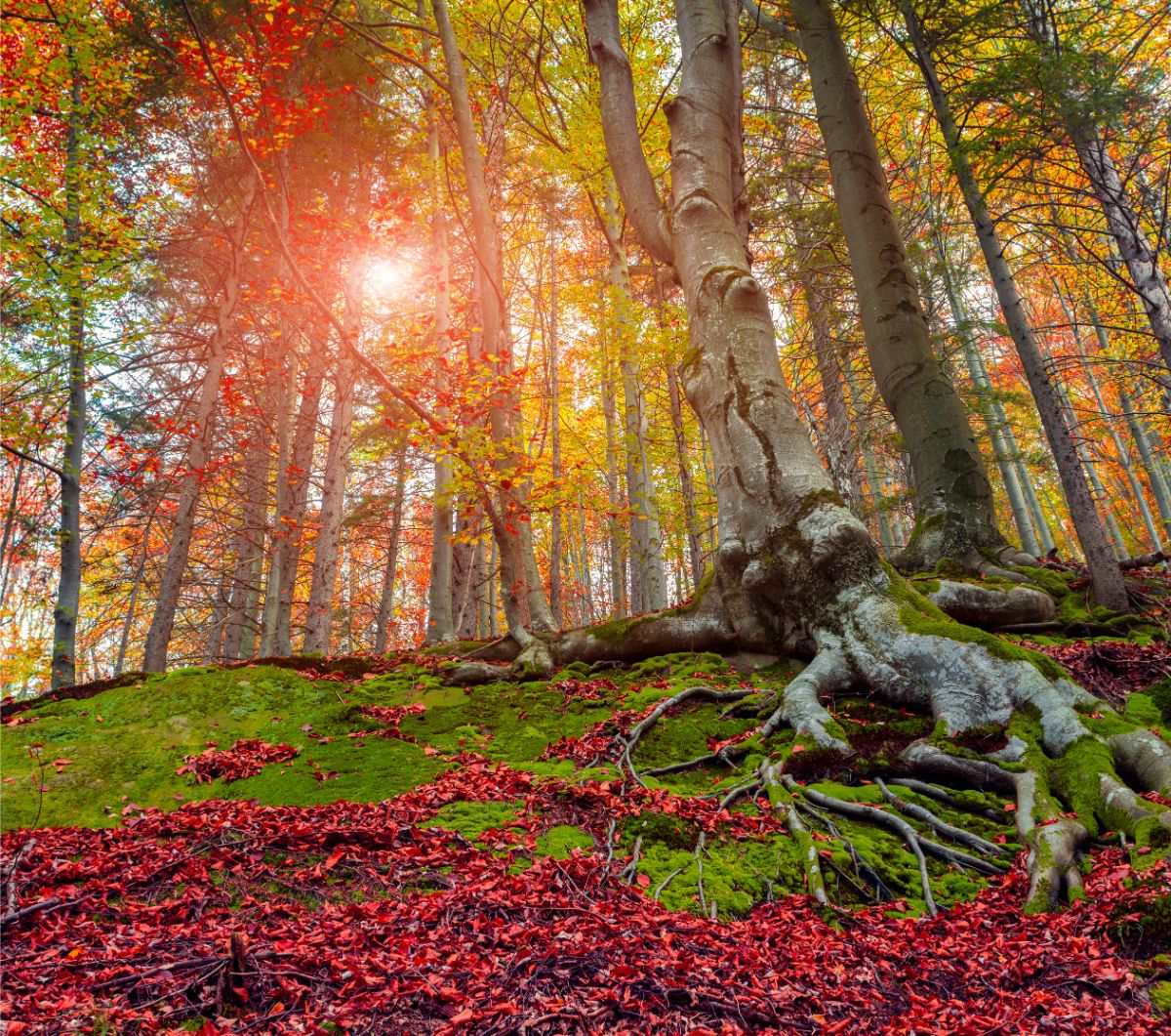 Red Green Forest