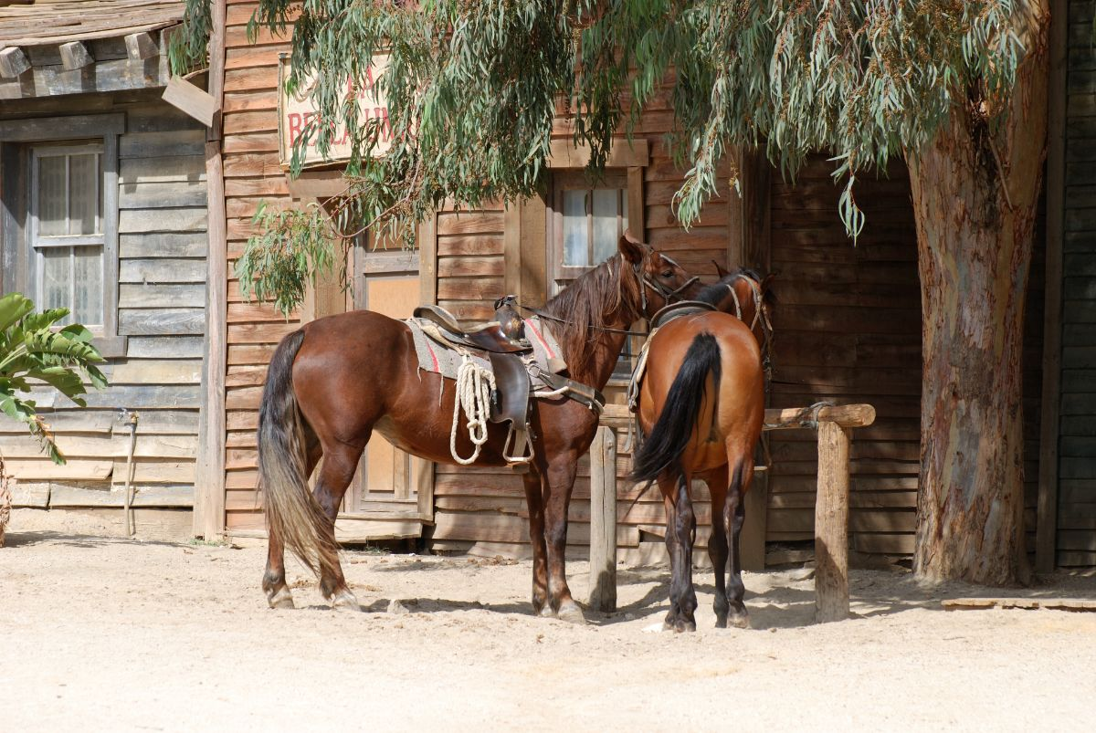Horses in Old West