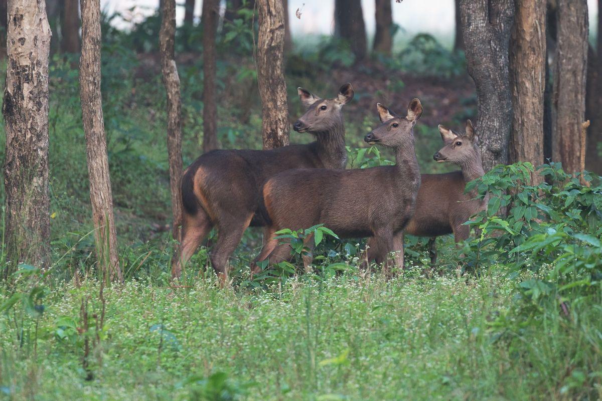 3 Deer