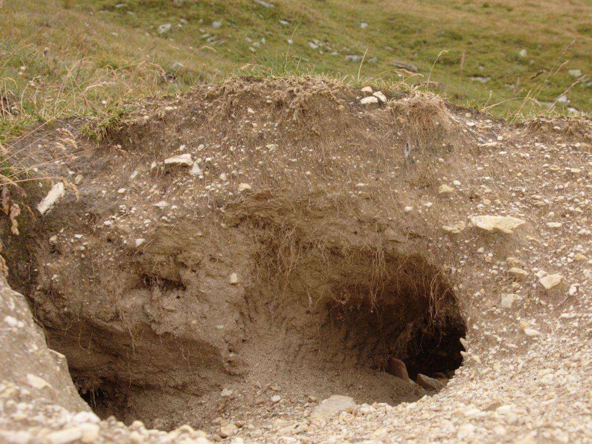 Marmot Hole