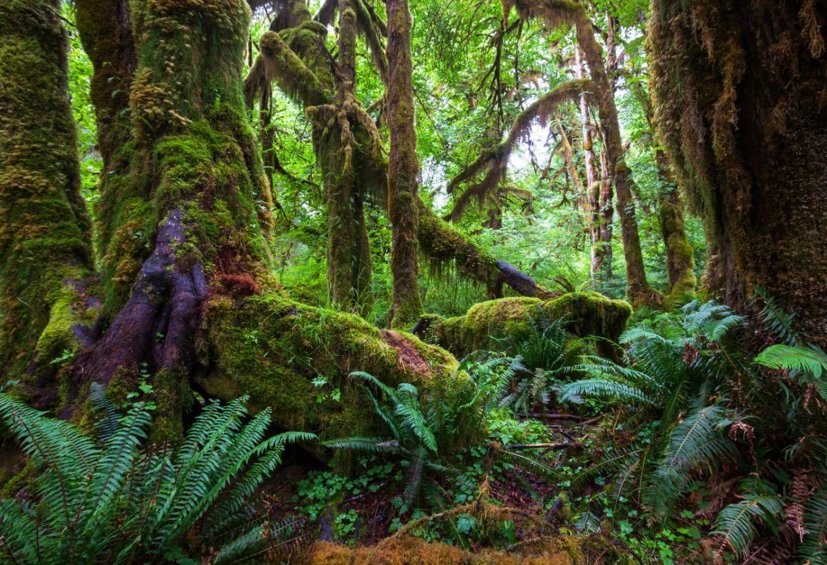 Rain forest falls