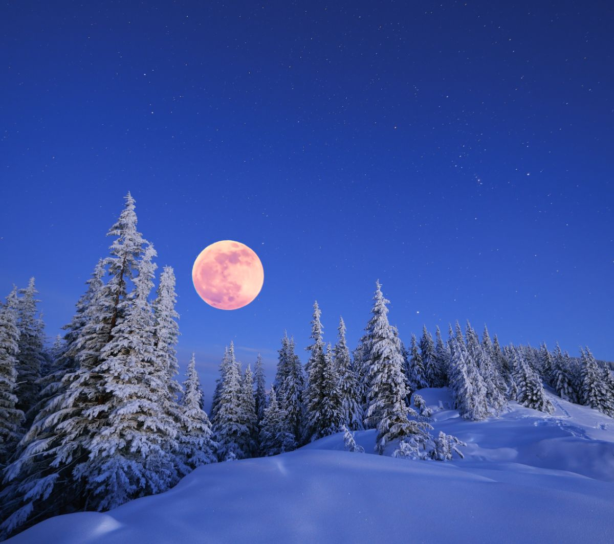 Snowy Forest Moon