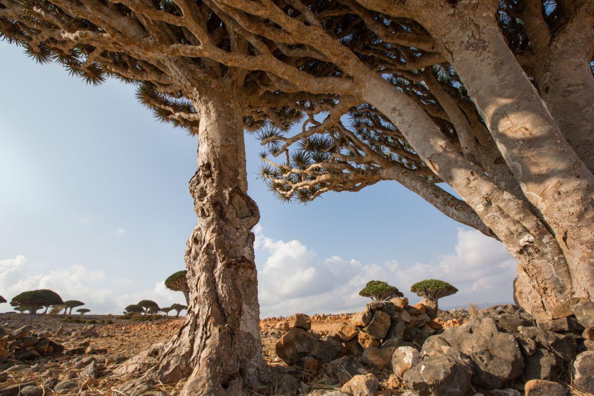 Socotra Path