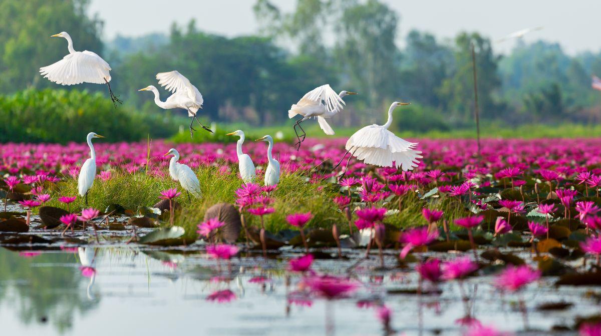 White Egrets in Sea